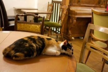 le-cafe-des-chats-bastille