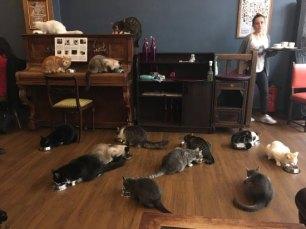 le-cafe-des-chats-marais